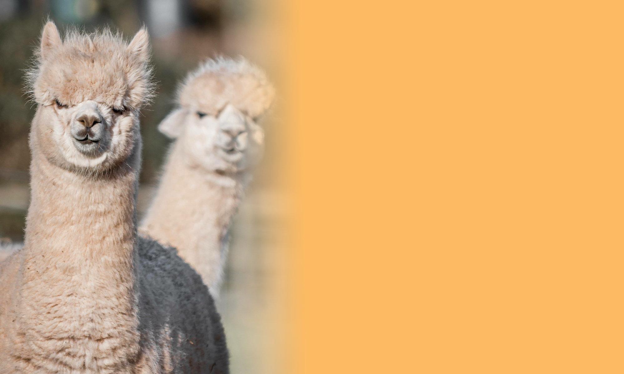 West Shires Alpaca Group